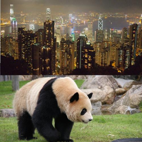 中国・香港8日以内 4G Wi-Fiルーター容量5GB 【中国、香港旅行や出張に!】